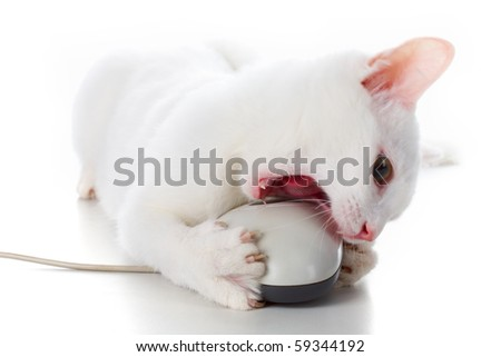 Image of playful white cat biting computer mouse over white background