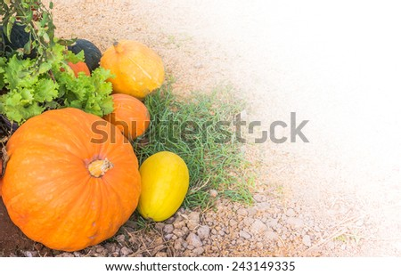 image of Pumpkins on ground background. - stock photo