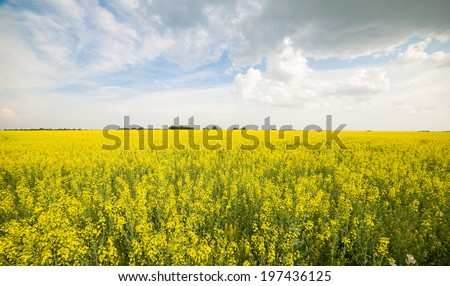 Image of rapeseed field before the rain - stock photo