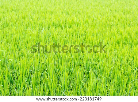 image of rice field on day time