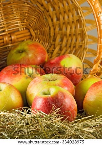 image of  ripe apples in a basket closeup - stock photo