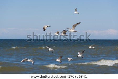 Image of sea gulls at the sea