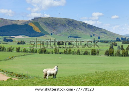 Image of sheep grazing in the fields of New Zealand - stock photo