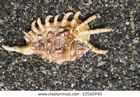 image of shell on the seashore
