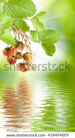 image of strawberry over the water closeup - stock photo