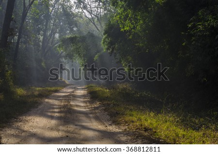 Image of sunlight falling on a forest path running through a forest in the state of Madhya Pradesh in India - stock photo