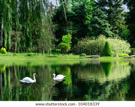 image of the lake and swans on a background of trees in the park - stock photo