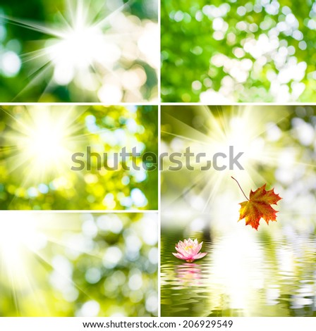 image of the sun and beautiful flower on a green background