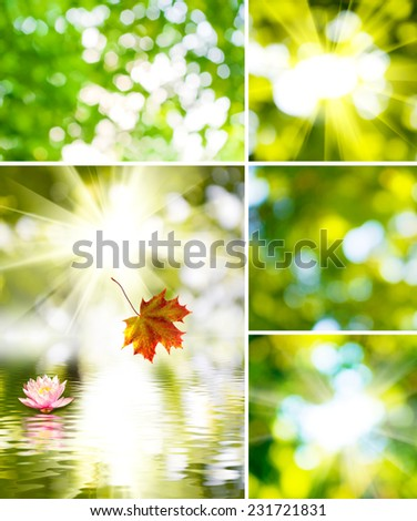 image of the sun and the beautiful flower on a green background