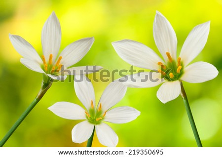 image of three flowers on a yellow background - stock photo