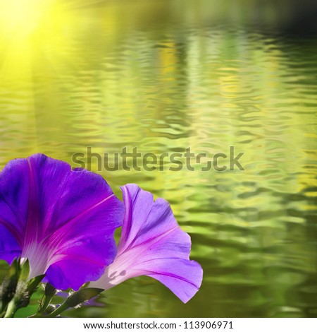 image of two flowers over the water - stock photo