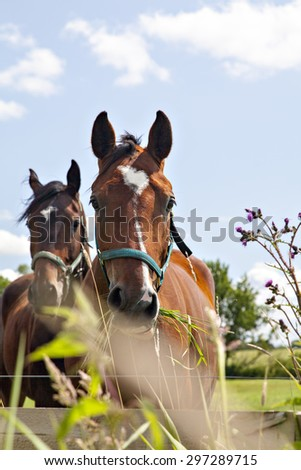 Image of two horses munching grass in their pen.  - stock photo