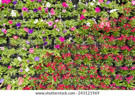 image of Various color flowers background. - stock photo