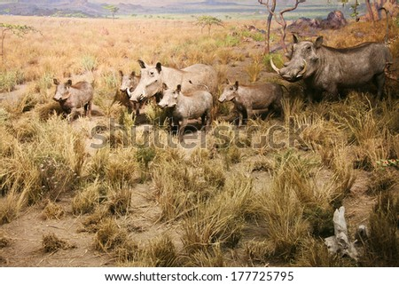 Image of warthog family standing in dry bush looking for food. Diorama  - stock photo