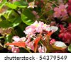 Image shows a beautiful flowers in garden - stock photo