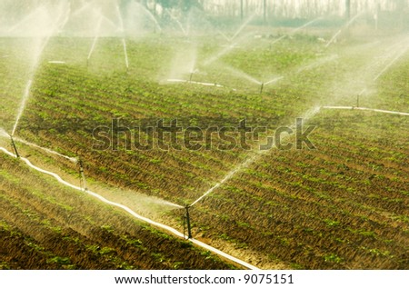 Image shows a vegetable growing field being irrigated in the early hours of the morning - stock photo
