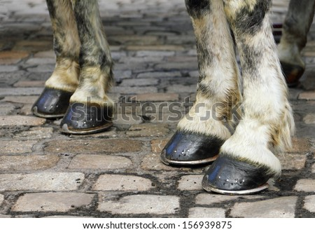Image with pair of white horse hooves on a block pavement. Christmas days in the old city of Vienna, Austria, Central Europe - stock photo