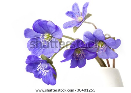 Images of an abstract of several violet flowers.