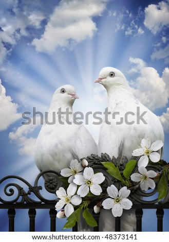 Imagination on a theme of love, spring and renovation in a spirituality and heart of person. Two love doves against blue sky in solar beams as a care and fidelity symbol.