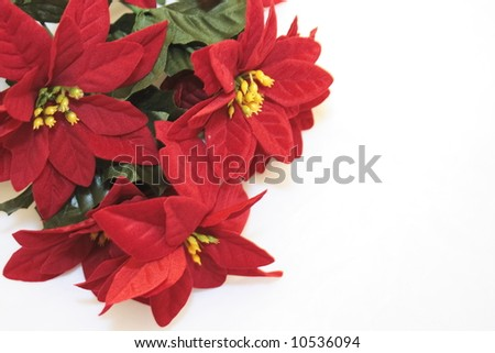imitation poinsettia flowers isolated over a white background