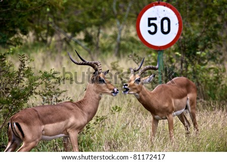 Impala and sign at Kruger National Park, South Africa - stock photo