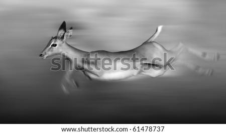 Impala running and jumping at full speed - stock photo
