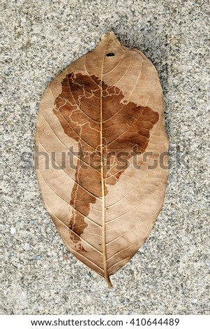 Imprint of the South America continent map on a browning leaf.  - stock photo