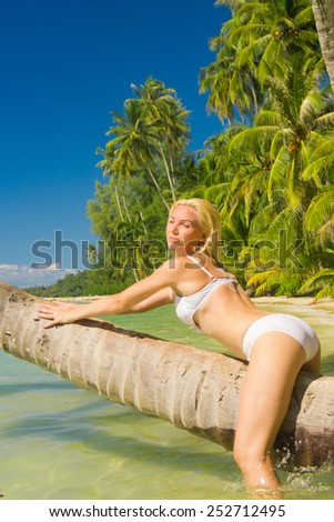 In a Coconut Grove In the Summer Sunshine  - stock photo