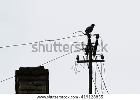 In a very old electric pole sits a raven croaks and predicts trouble and danger - stock photo