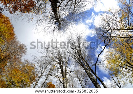 in forest - stock photo