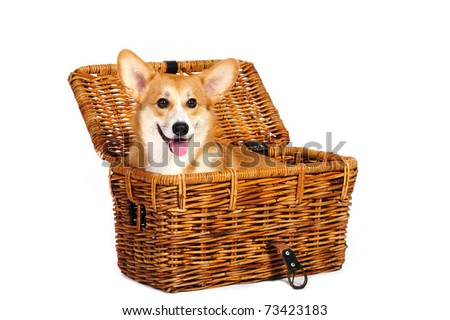 in front of a white background sitting in a travel basket - stock photo