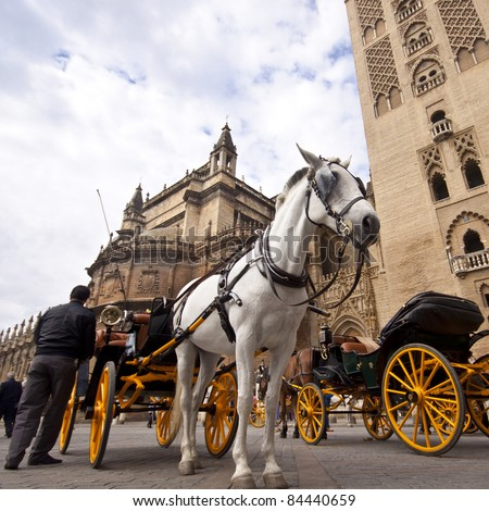 In front of the Cathedral. White horse and traditional tourist carriage in Sevilla, Spain. Low angle shot. - stock photo