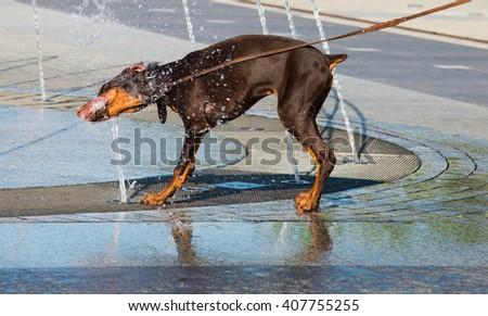 In hot summer day the dog drinks water from the fountain - stock photo