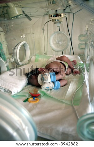 in incubator - stock photo