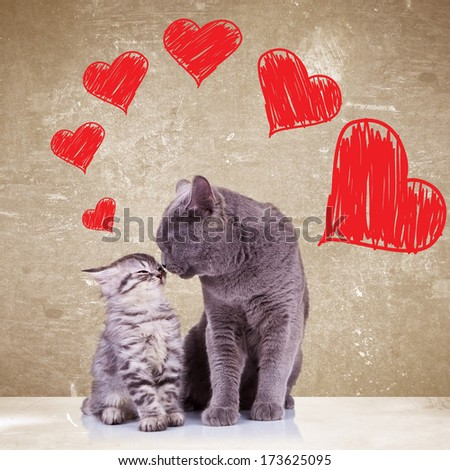 in love cats kissing each other on valentines day  - stock photo