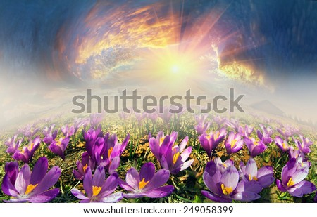 In May, the snow melts  mountains are covered by a beautiful carpet of flowers. Light of dawn harbor clearing fragrant flower veil, creating mood magic and the mystery. Unique show attracts tourists  - stock photo