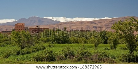 In Morocco, an orchard and various cultures lies at the feet of hills. Arabian houses are visible behind the trees. The snow capped mountains of Atlas stand in the background. - stock photo