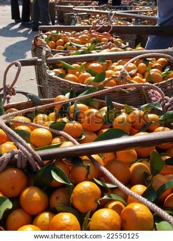 In orange harvest season,farmer took the fresh orange to the market by shoulder pole. - stock photo