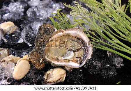 In place Oyster on Ice. Black Background. - stock photo