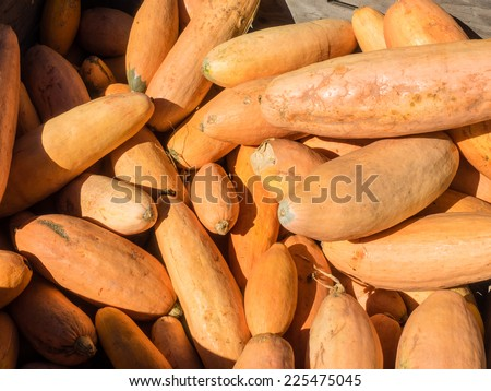 In shape and skin color, Banana winter squash is reminiscent of a banana. It grows up to two feet in length and about six inches in diameter. Its bright orange, finely-textured flesh is sweet.  - stock photo