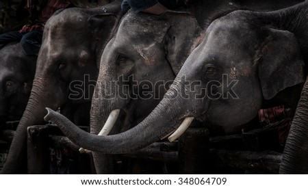 In Thailand, elephants are cute and clever. - stock photo