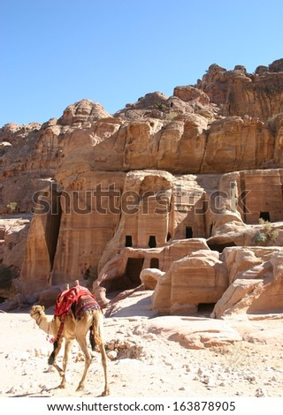 in the ancient Nabataean ruin of Petra, Jordan, a lone camel walks past hand carved caves in the hillside - stock photo