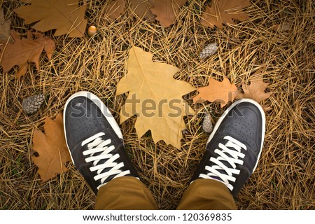 In the autumn forest. Unusual view - from my eyes - stock photo