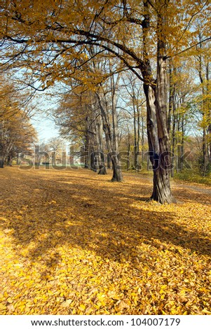 In the autumn park