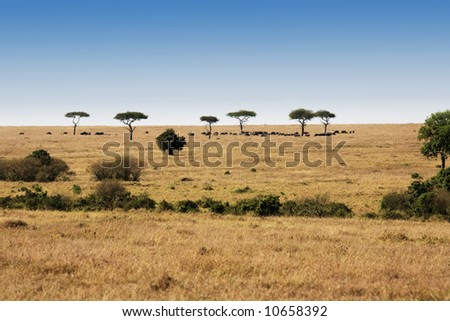 in the beautiful plains of the masai reserve in kenya africa - stock photo