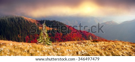 In the Carpathians, golden autumn cold often turns into snow, and then again come warm sunny days. Against the background of high mountain ranges and beautiful beech forests scenic