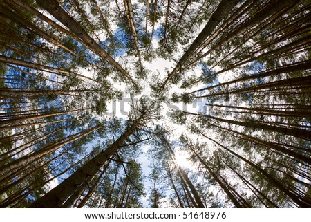 In the deep forest. looking up, shot with fisheye lens - stock photo