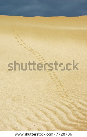 In the desert. Morocco. - stock photo
