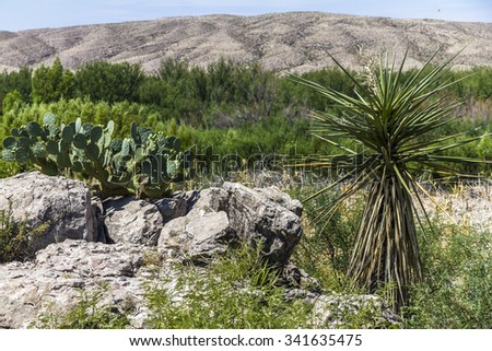 In the Desert of Big Bend National Park - stock photo