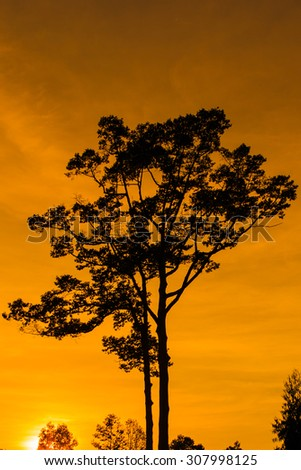 In the evening, the tree silhouette, very beautiful